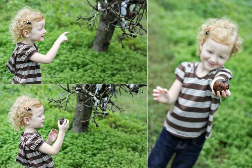 Orchard 001