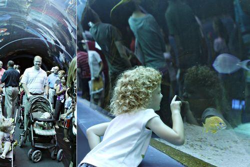 Aquarium collage 001