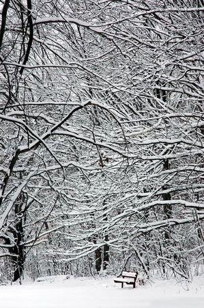 Ott_winter